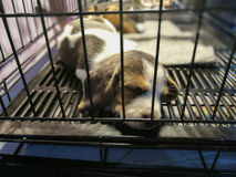 Puppies sleep inside a cage. On display for sale Stock Photo