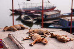 Puppies sleep in the warm sunny place at the river Stock Photography