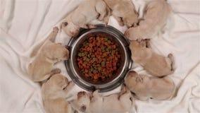 Puppies sleeping around their mother feeding bowl