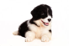 Puppy Stock Images