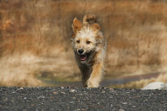 Free Puppy Royalty Free Stock Photography - 13583587