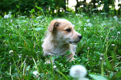 Free Puppy Royalty Free Stock Images - 14188819