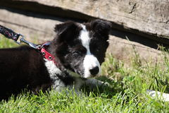 Puppy. In grass, little dog Royalty Free Stock Images
