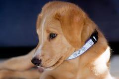 Free Puppy Stock Photo - 16086710