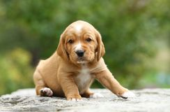 Puppy. Small adorable puppy on the stone sitting Royalty Free Stock Photo