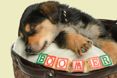 Puppy. A sleeping puppy is having a nap in a basket, shot with his name spelled using alphabet blocks Royalty Free Stock Photography