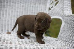 Puppy 2 stock fotografie