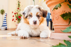 Puppy. Young puppy lying on fresh green grass in public park Stock Image