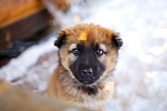 Puppy. Portrait of a dog on a snow background Stock Images
