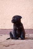 Puppy Stock Photography