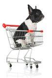 Puppy Stock Image