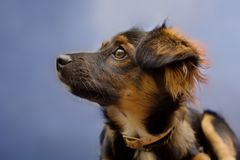 Free Puppy Royalty Free Stock Photography - 4800867