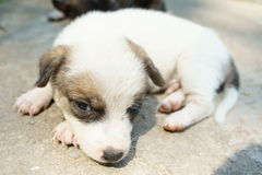 Puppy Stock Afbeeldingen