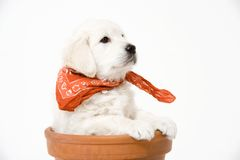 Puppy. Cute puppy royalty free stock images