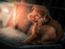 Puppy stock foto's