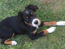 Puppy! Royalty-vrije Stock Afbeelding