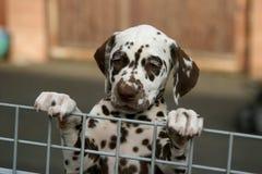 Puppy achter een omheining Stock Foto's
