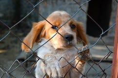 Puppy achter een omheining Stock Afbeelding