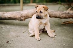 A puppy alone stock photography