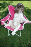 puppy als voorzitter Stock Foto's