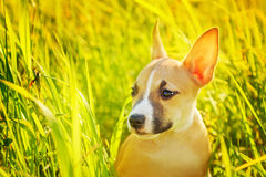 The puppy Royalty Free Stock Photo