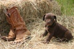 Puppy & Laarzen Stock Foto's