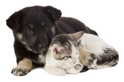 Free Puppy And Cat Royalty Free Stock Photography - 21473747