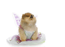 Puppy angel Stock Photo