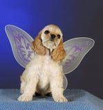Puppy angel Royalty Free Stock Photo