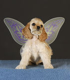 Puppy angel Royalty Free Stock Photography