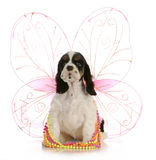 Puppy angel Royalty Free Stock Images