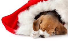 Puppy as a christmas gift Stock Photos