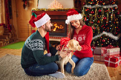 Puppy as Christmas gift Stock Images