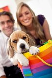 Puppy as a gift Stock Image