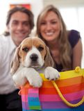 Puppy as a gift Stock Images