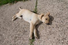 Puppy asleep Stock Photo