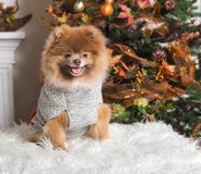 Puppy Autumn. Clothes and fall theme Royalty Free Stock Photo