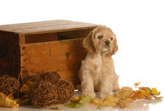 Puppy with autumn leaves Royalty Free Stock Photography