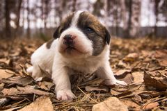 Puppy. In the autumn park Royalty Free Stock Image