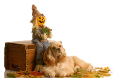 Puppy in autumn scene Stock Image
