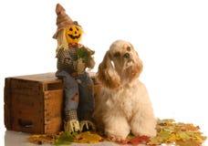 Puppy in autumn setting Stock Photos