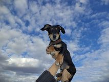 Puppy on a background sky. Royalty Free Stock Photos