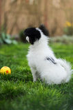 Puppy with a ball stock images
