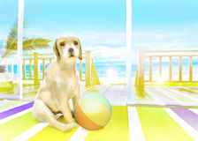 The puppy with the ball on the carpet on the background of the s Stock Photography