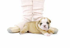 Puppy and ballerina Royalty Free Stock Images