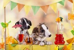 Puppy bartending in the bar lemonade Royalty Free Stock Photos