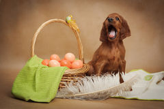 Puppy and basket with easter eggs Royalty Free Stock Photography