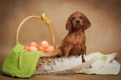 Puppy and basket with easter eggs Stock Photography