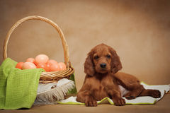 Puppy and basket with easter eggs Stock Images