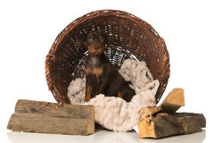 Puppy in a basket Royalty Free Stock Photos